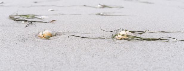 Fototapete - Muscheln am Sandstrand