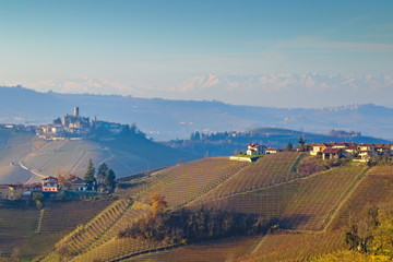 In de dag Diepbruine Morning winter view on landscape of smooth hills with rows of vineyards in the Langhe region, Cuneo, Piedmont, Italy