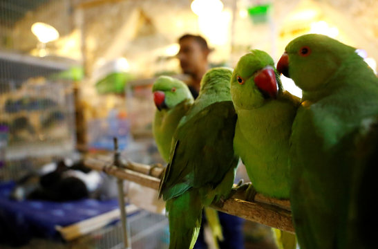 Birds are for sale at a pet market inside the Souq Waqif market in Doha
