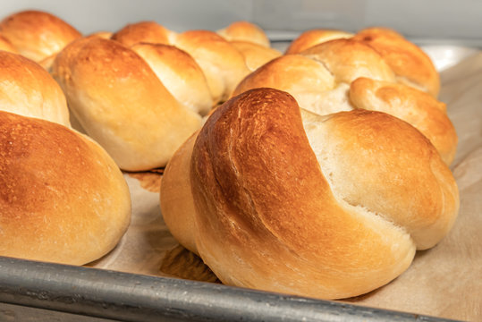 Homemade yeast buns tied up in a knot. Traditional Swiss bread recipe called Zopf or Butterzopf. The bread knots are arranged in rows on baking paper, fresh out off the oven.