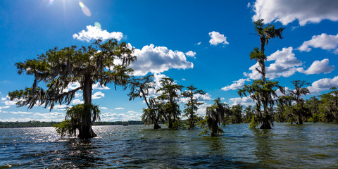 APRIL 25, 2019, BREAUX BRIDGE, LOUISIANA, USA - Lake Martin Swamp in spring near Breaux Bridge, Louisiana - shot from boat Fotomurales