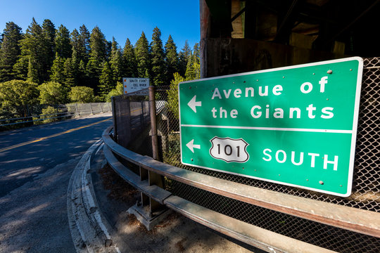 MAY 31, 2019, N CALIFORNIA, USA - Avenue of Giants and giant redwood forest along Route 101 in N California