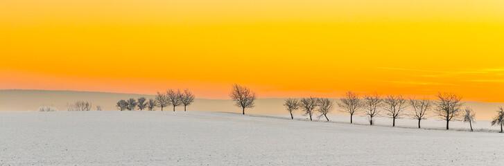 Garden Poster Orange winter landscape with tree alley in sunset