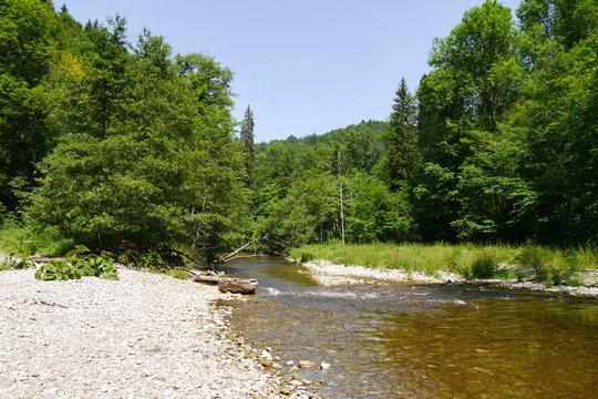 Fluss und Flusskies im Wald