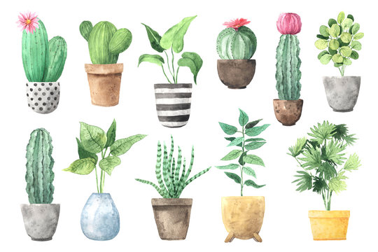 Watercolor hand painted house green plants
