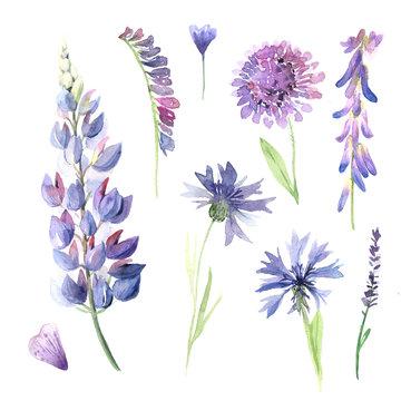 Watercolor hand painted wildflowers, field plants