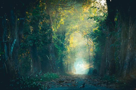 The beam of light in the path of the magic forest