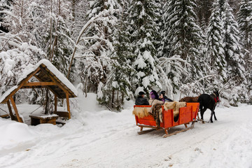 Synevyr national park, ukraine - 11 FEB 2018: winter holiday fun. riding horses in red open sleigh through forest. nature scenery with spruce trees in snow