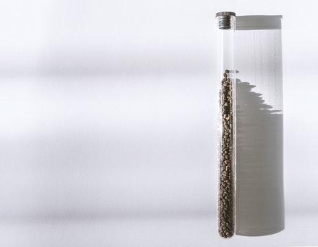 Babchi dry raw seeds (Psoralea Corylifolia) in glass tube.