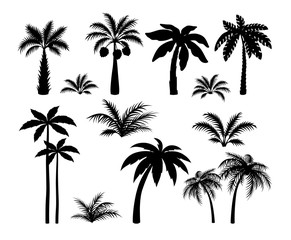 Silhouette palm trees. Set tropical black jungle plants illustration. Vector isolated image silhouettes leaves and coconut jungle tree on white background