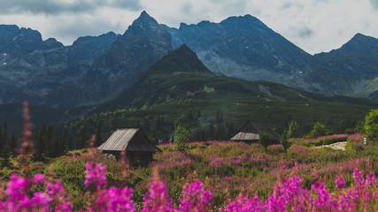 Fototapeten Gebirge Hala Gąsienicowa