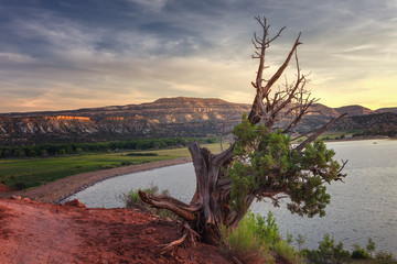 Landscape in the petrified forest of Escalante, with a juniper in the foreground and in the background the mountains and the Wide Hollow Reservoir near Escalante, Utah