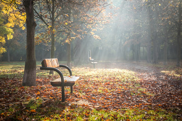 Nicely illuminated lonely park bench on an early foggy morning in autumn