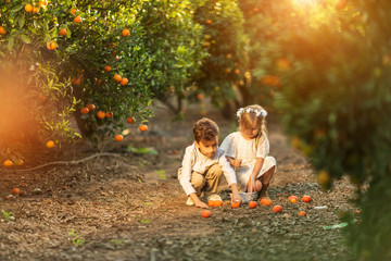 boy and girl collect the oranges in a Sunny day in a citrus grove Fotomurales