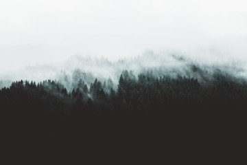 Photo sur cadre textile Gris traffic Moody forest landscape with fog and mist