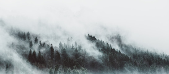 Autocollant pour porte Blanc Moody forest landscape with fog and mist