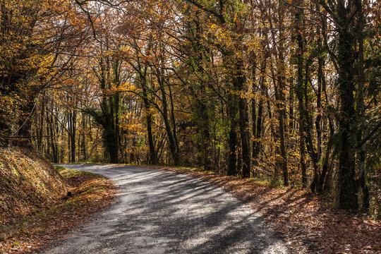 Donzenac (Corrèze, France) - Sous bois en automne