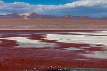 Photo Stands Magenta Laguna colorada on the altiplano in Bolivia.