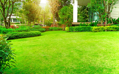 Spoed Fotobehang Lime groen Fresh green Burmuda grass smooth lawn as a carpet with curve form of bush, trees on the background, good mainternance lanscapes in a luxury house's garden under morning sunlight