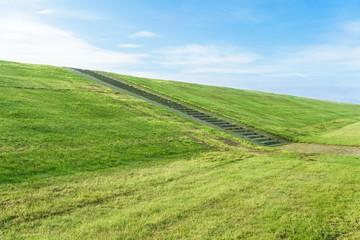 Fototapete - Frisch gemähtes Gras auf dem Deich