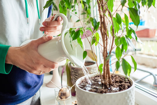 woman's hands watering plants in home. Making homework. Domestic life concept