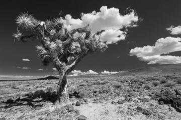 Cactus dans la vallée de la Mort