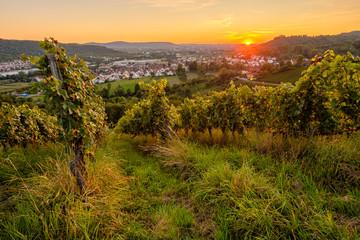 Fototapete - Sonnenuntergang im Weinberg Weitwinkel