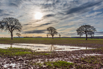 Canvas Prints Culture Bare trees in a waterlogged field in Sussex, on a sunny winters day
