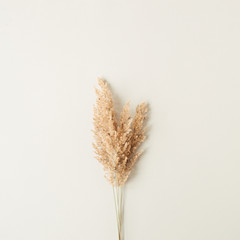 Obraz Reeds foliage branches bouquet on neutral pastel beige background. Flat lay, top view floral design. - fototapety do salonu