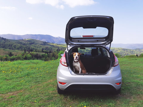 Transportation of dogs on a trip. Dog in the trunk of a car on a background of mountains