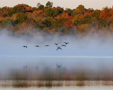 Geese flying on foggy lake