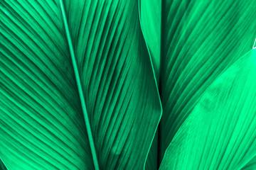 Wall Mural - green leaf texture, dark green foliage nature background, tropical leaf