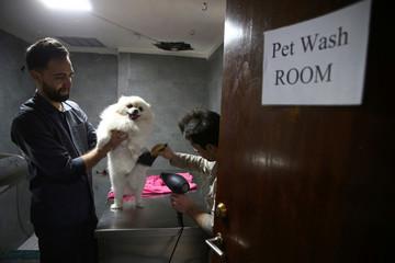 Iranian vets dry a dog at Elahieh Pet Hospital in Tehran
