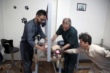 An Iranian vet cuts a dog's hair at Elahieh Pet Hospital in Tehran