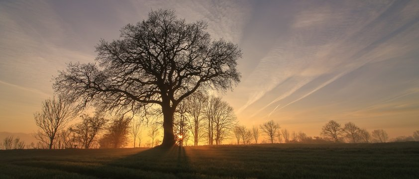 bare tree with sun rays, tree funeral, forest cemetery