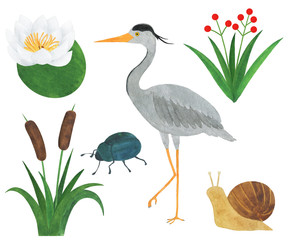 Heron watercolor bird reed flowers lily beetle snail set