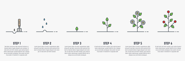 Fototapeta Growing plant stages. Seeds, watering step, sprout and flower, grown plant. House or outdor plant. Line style flat illustration of plant with leaves, flowers and fruit. Thin lines. Grow process.
