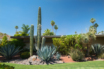 Garden architecture landscape in desert cities. Saguaro (Carnegiea gigantea) cactus and other succulent plants and Californian palm trees around a secluded house in Palm Springs, California, USA.