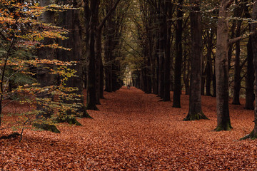 Photo Stands Road in forest Pathway between trees with fallen leaves