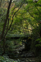 山林に流れる小川と橋