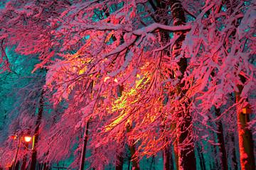 Poster Crimson Winter park at night with lanterns.