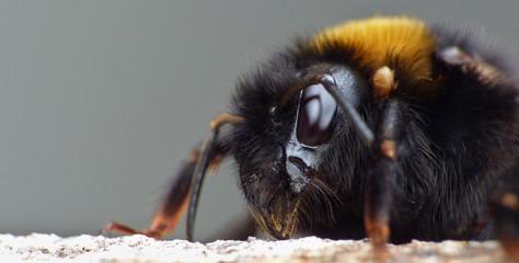 Foto op Canvas Hand getrokken schets van dieren Bee Eating Raw Honey