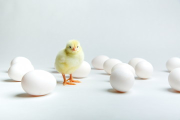 yellow chick with chicken eggs on a white background