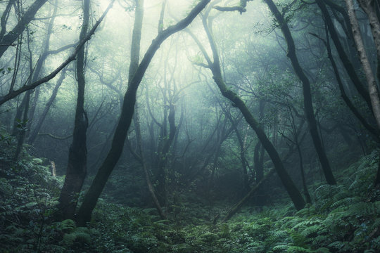 tree silhouettes in dark green foggy forest