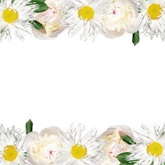 Wall Mural - Beautiful floral background of chamomile and peonies. Isolated