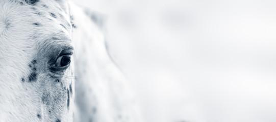 Foto op Plexiglas Paarden Horse eye, Appaloosa horse eye
