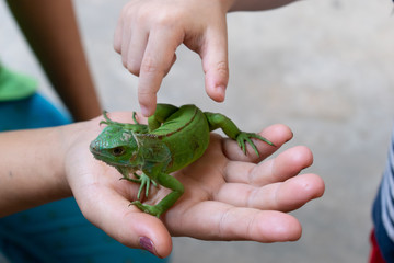 hand child touching skin reptil animal of small exotic pet