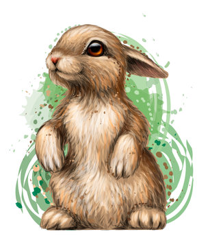 Rabbit. Color, artistic, graphic image of a rabbit on a white background in watercolor style.