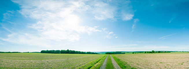 Ingelijste posters Cultuur Panorama of summer green field. European rural view. Beautiful landscape of wheat field and green grass with stunning blue sky and cumulus clouds in the background.