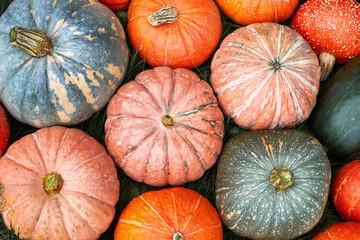 Organic healthy orange and green pumpkin flat lay
